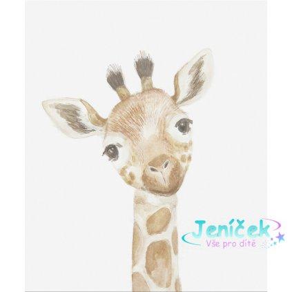 Obrázek na zeď Žirafa