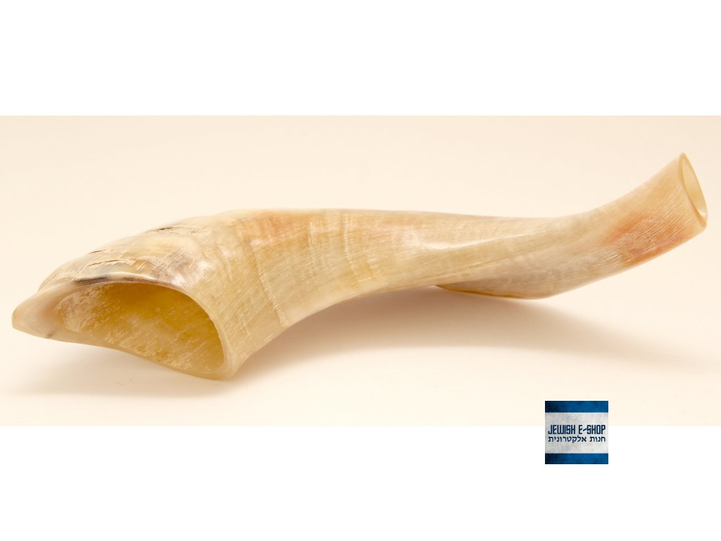 Šofar přírodní malý 25 až 28 cm - z Izraele