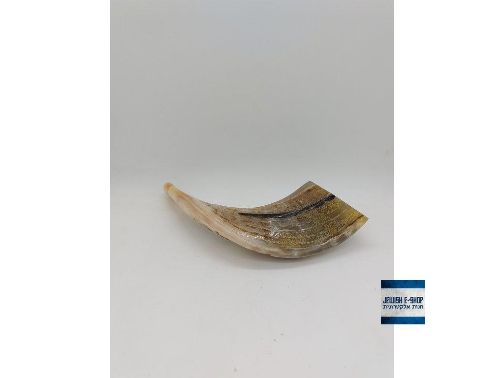 "Beraní  šofar 13"" (cca 33 cm) - KOSHER"