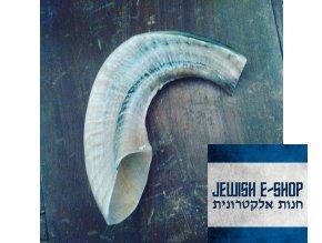 Šofar přírodní malý 28 cm - KOSHER