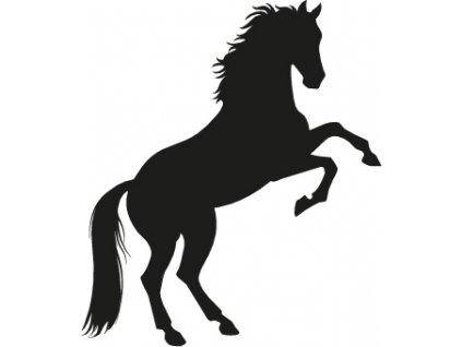 Kůň (1)
