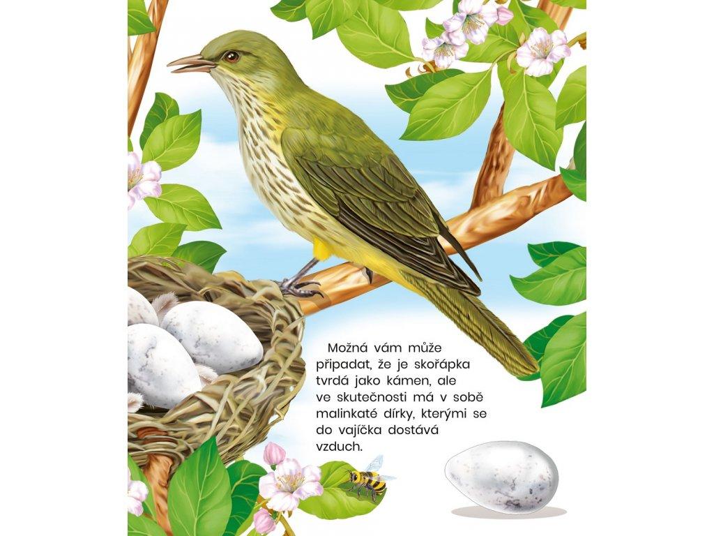 Tvrdé ptáky obrázky