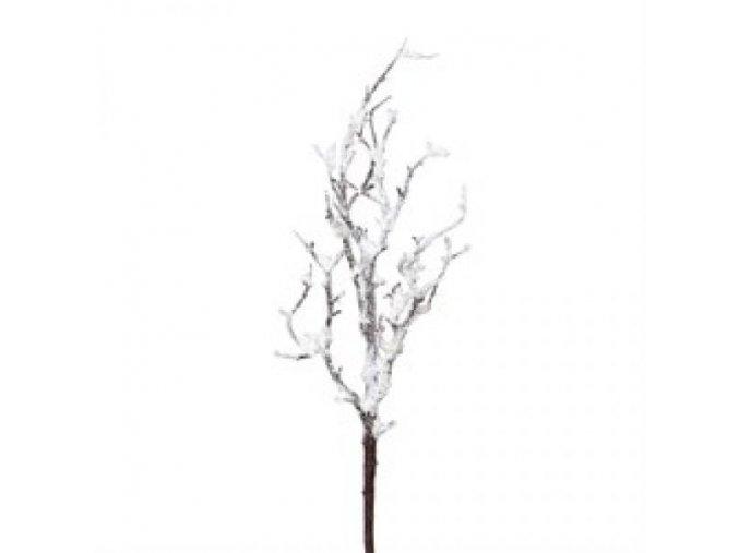 větev (1)