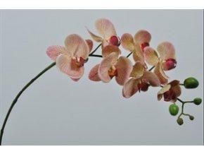 Orchidej 77 cm SILK KA