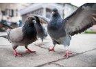 Holubi a ptáci
