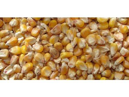 kukurice2