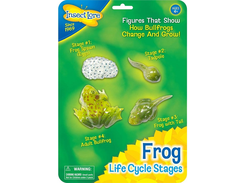 Životní Cyklus Žáby
