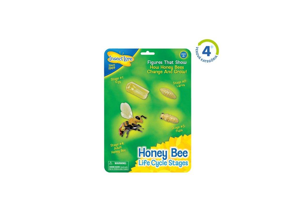 Životní Cyklus Včely