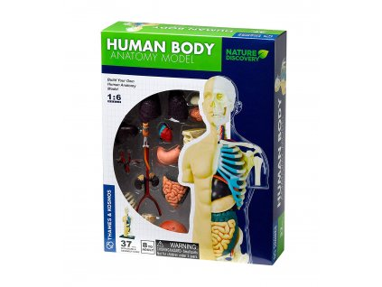 467 model lidskeho tela