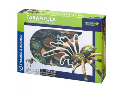 59 tarantula anatomicky model