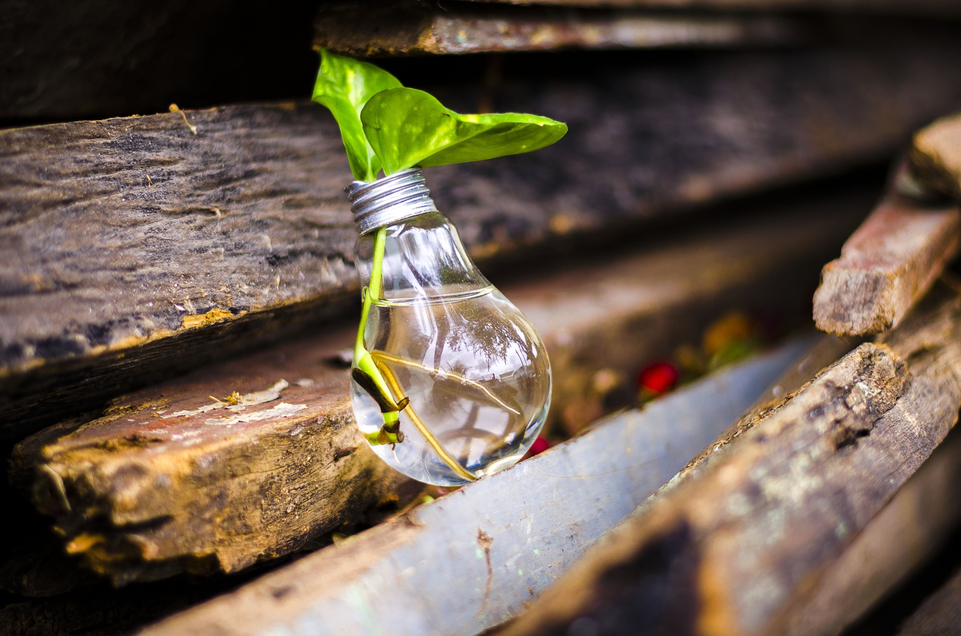 Jak začít s udržitelným stylem života?