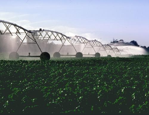 Biobavlna – méně známý způsob, jak šetřit vodou
