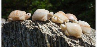 želvičky onyx