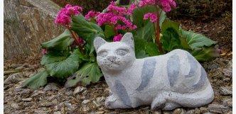 kočka mourek kamenná