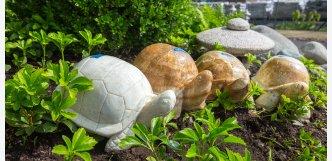Velké onyxové želvy