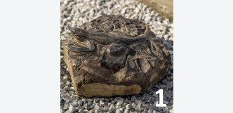 ještěrka na kameni - symbol zdraví