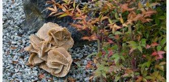 Pouštní růže 4