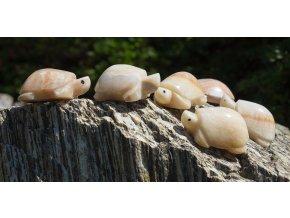 Želvička malinká (onyx)