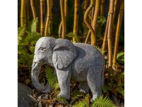 Slon (žula)