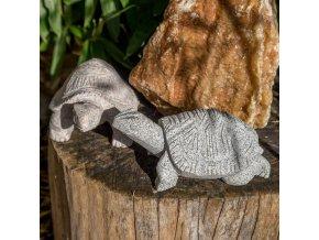 Želva větší (žula)