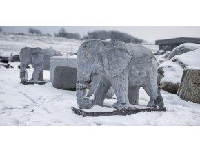 Slon vápencový