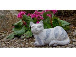 Kočka Mourek