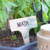 Zápich na bylinky - Máta