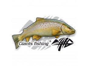 Nálepka malá - Giants Fishing Pstruh