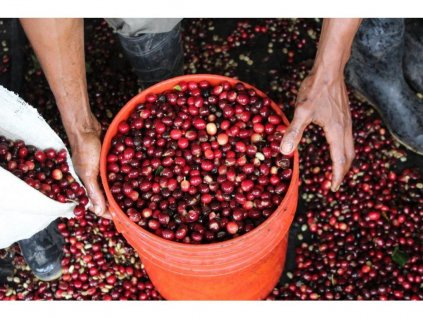 Káva Brazílie Fazenda Freitas
