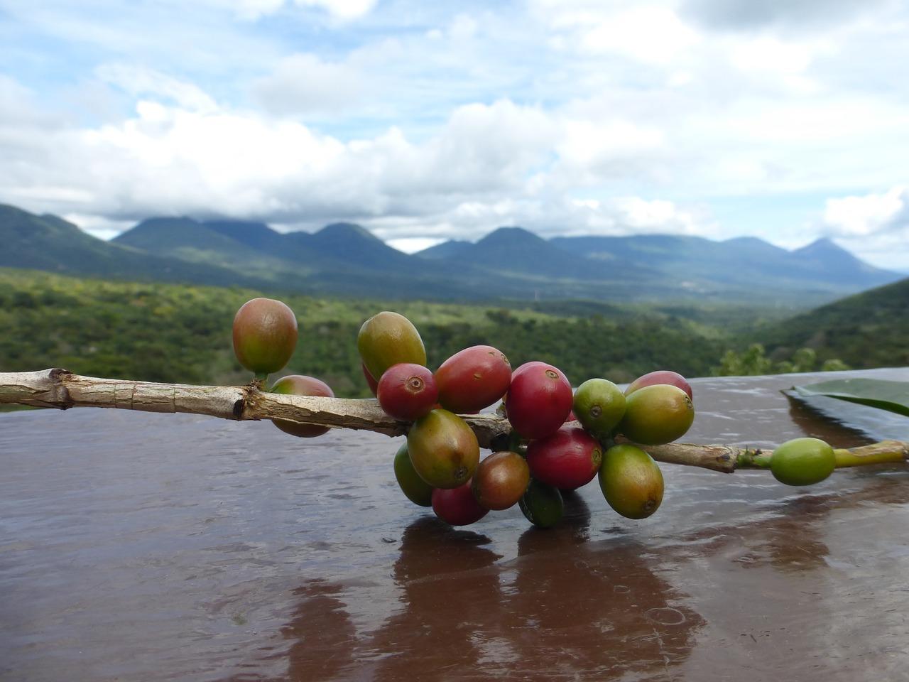 Průvodce vlastnostmi kávy: Jižní Amerika
