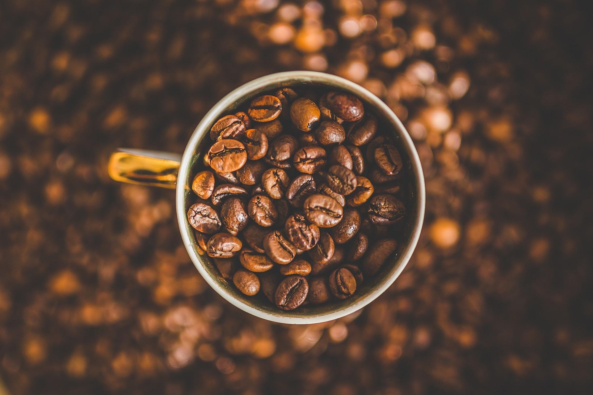 Arabica a robusta: rozdíly mezi nejznámějšími druhy kávy