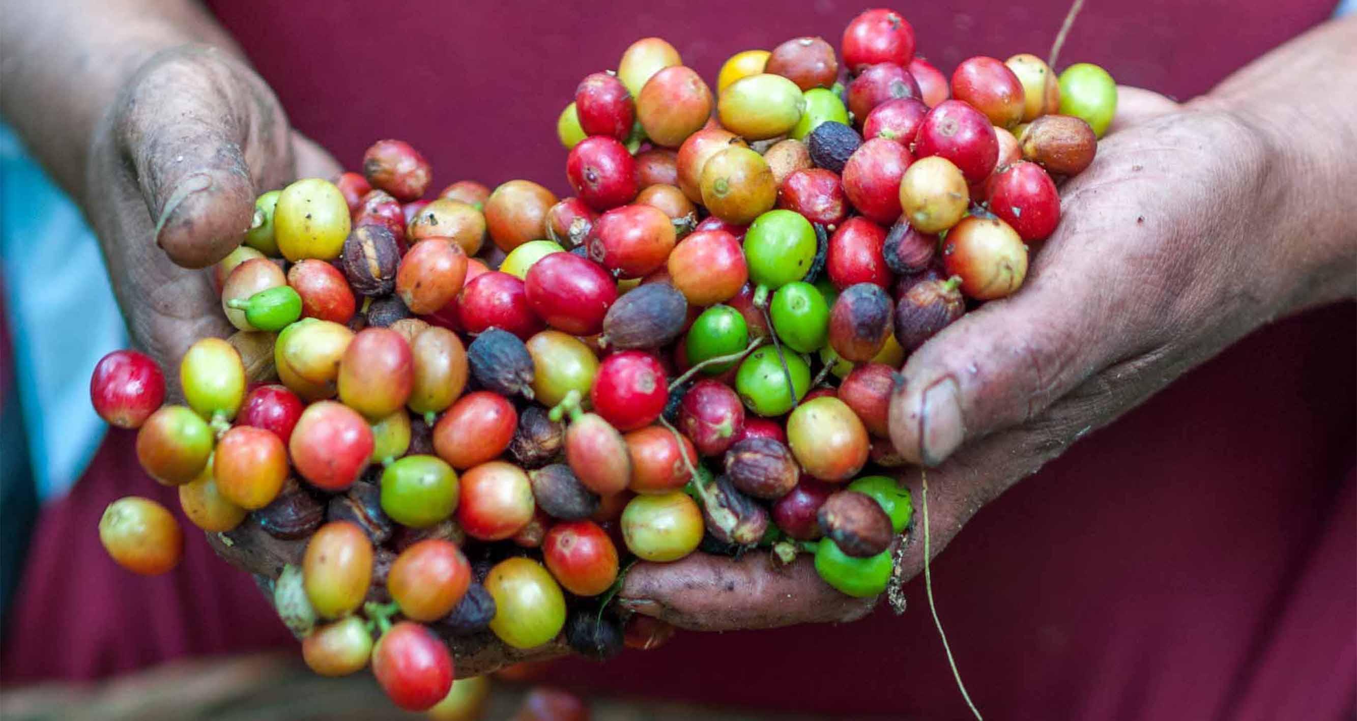 Jemen - Úžasná káva s dlouhou historií