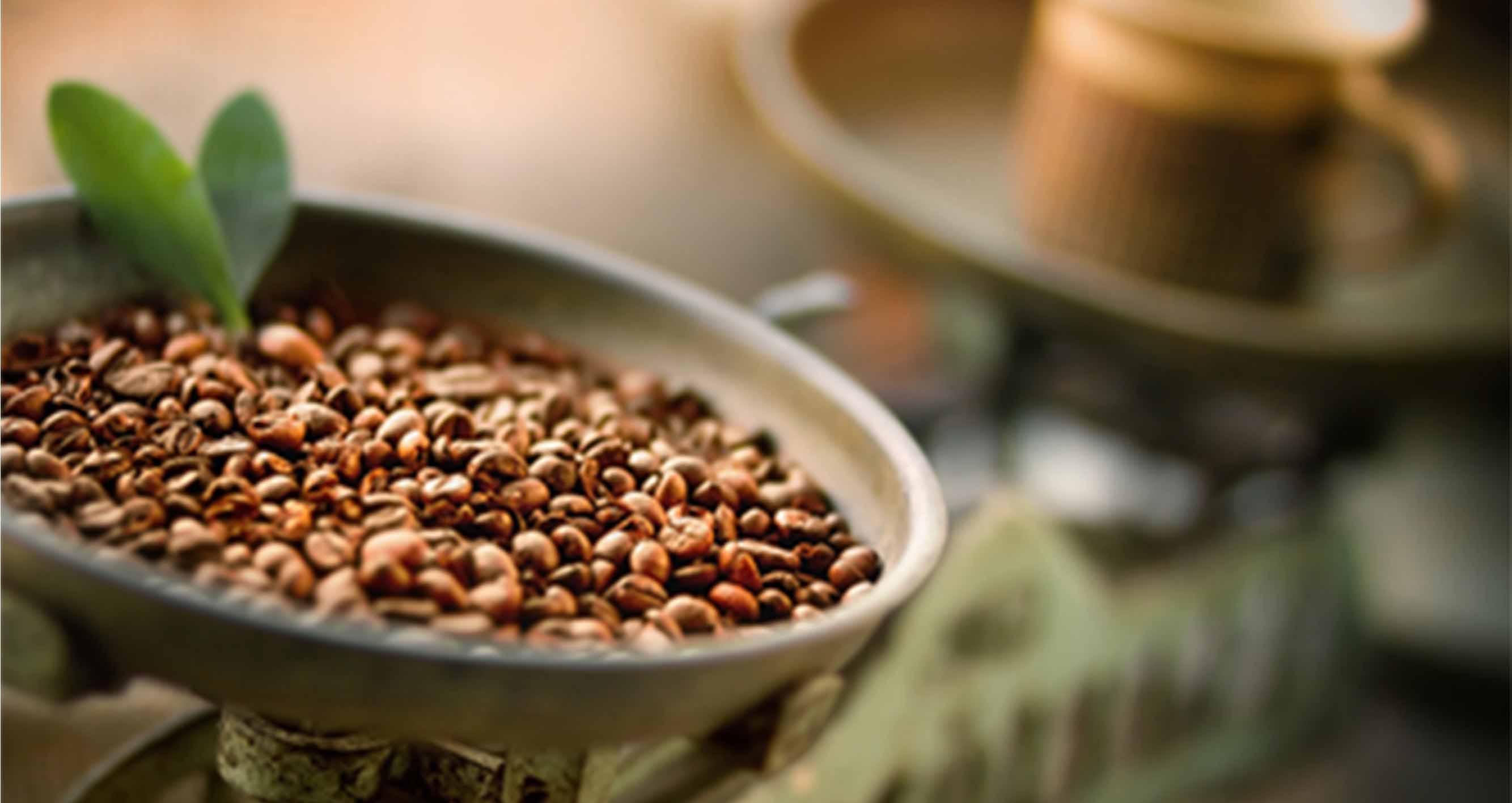 Mexiko - Skvělá káva od malých pěstitelů