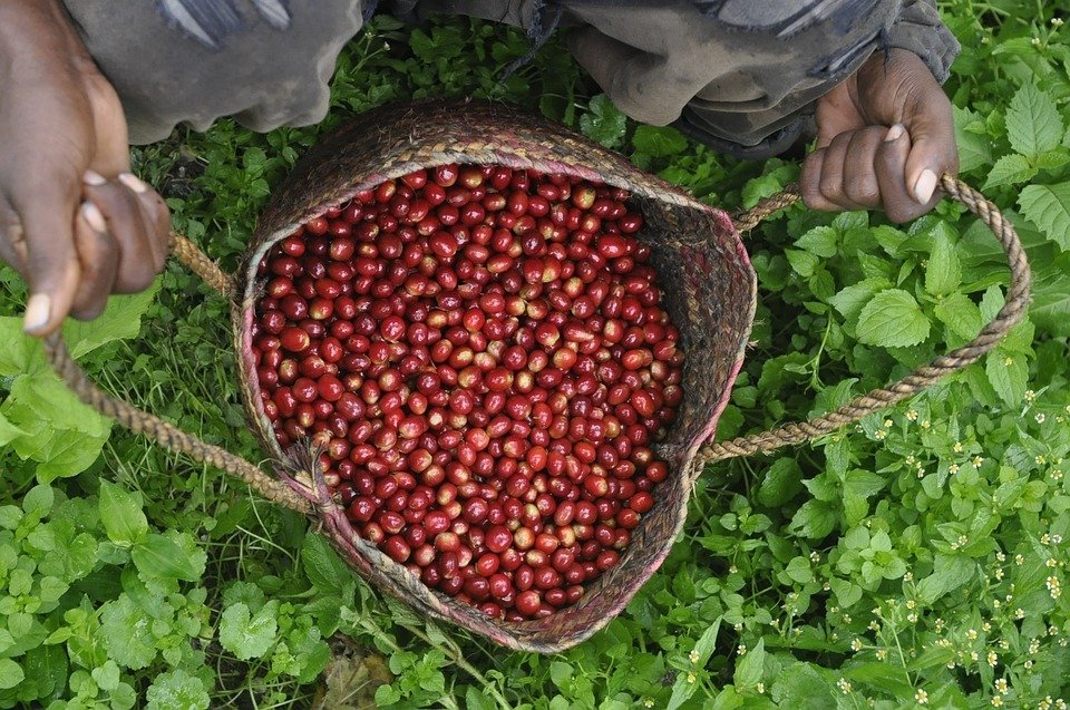 Proč je Káva do kapsy tak oblíbená?