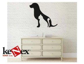 Obraz na stěnu z dřevěné překližky - Pes a kočka