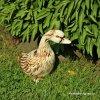 Kachna stojící