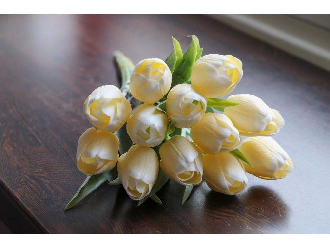 Tulipán žlutobílý