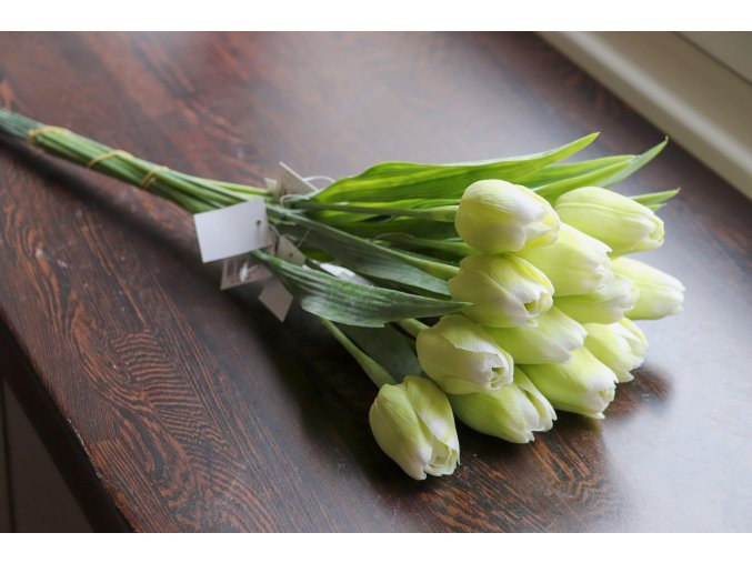 Tulipán zeleno bílý
