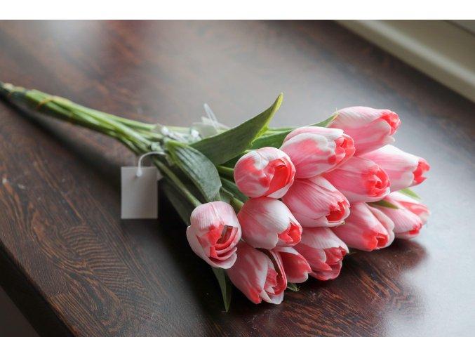 Tulipán bílo červený