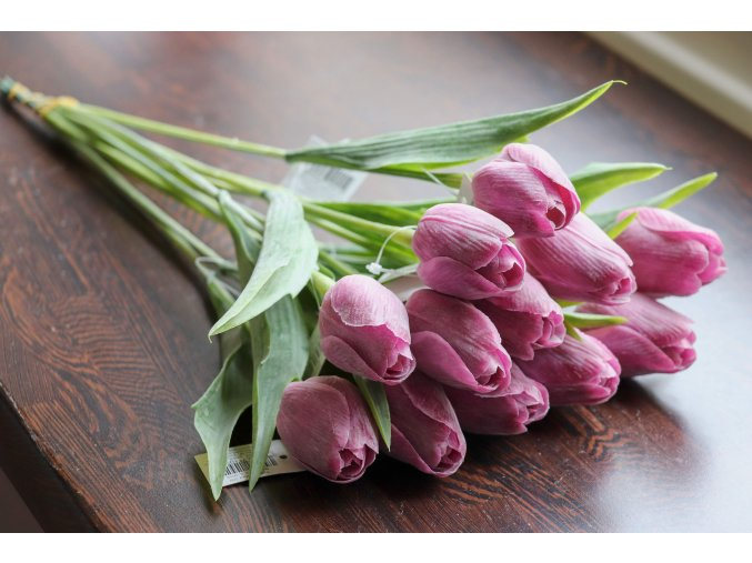 Tulipán červenorůžový