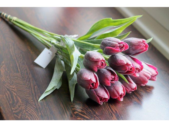 Tulipán vínový