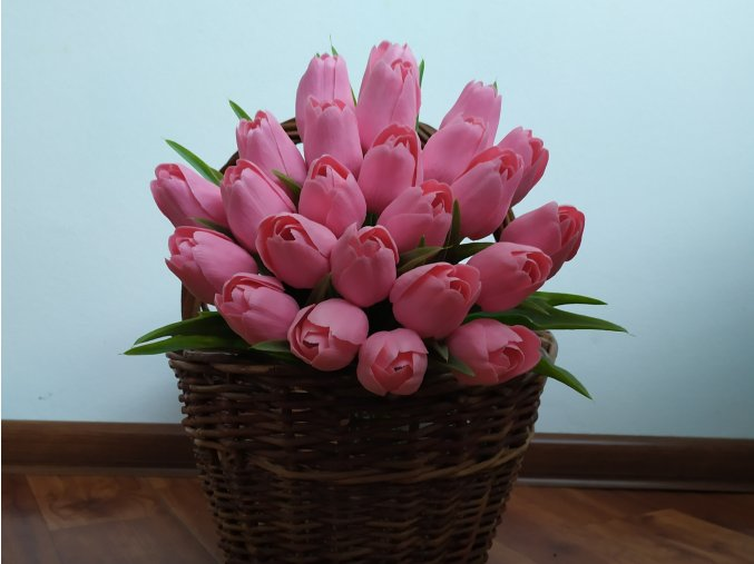 Tulipán růžový