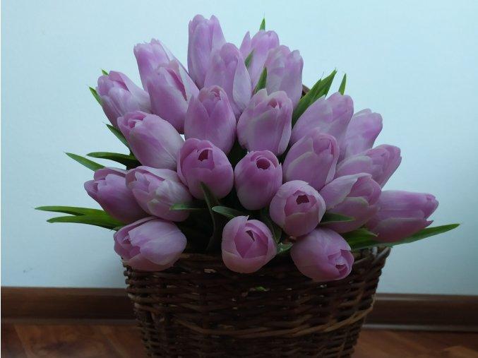 Tulipán Levandulově bílý