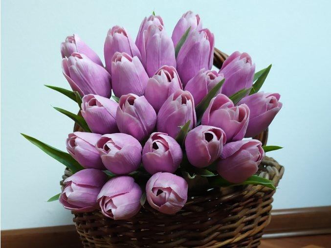 Tulipán temně fialový