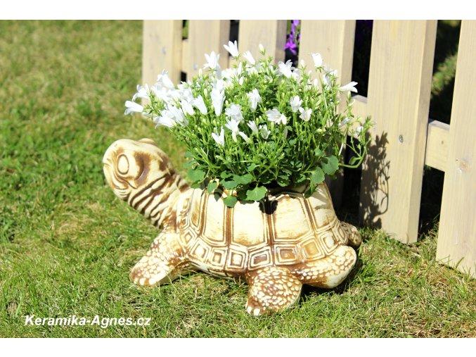 Zahradní mrazuvzdorný květináč ŽELVA malá