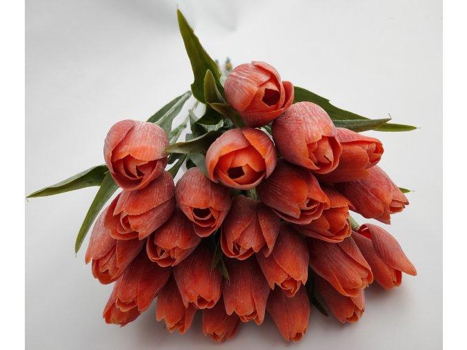Tulipán Orange A80