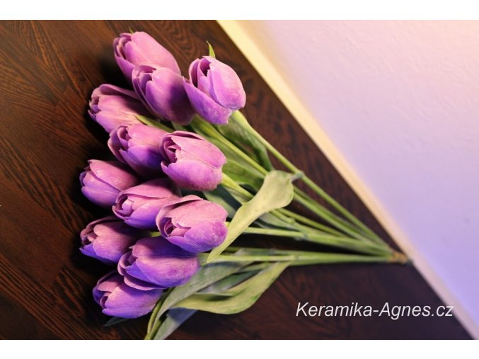 Tulipán fialový