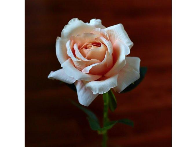 Růže lososová