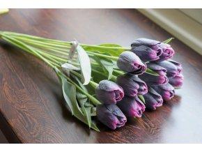 Tulipán švestkově fialový