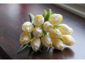 Tulipán krémový